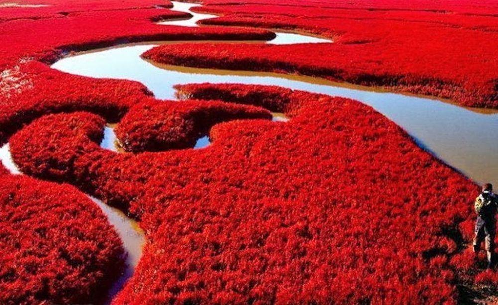 Panjin Red Beach