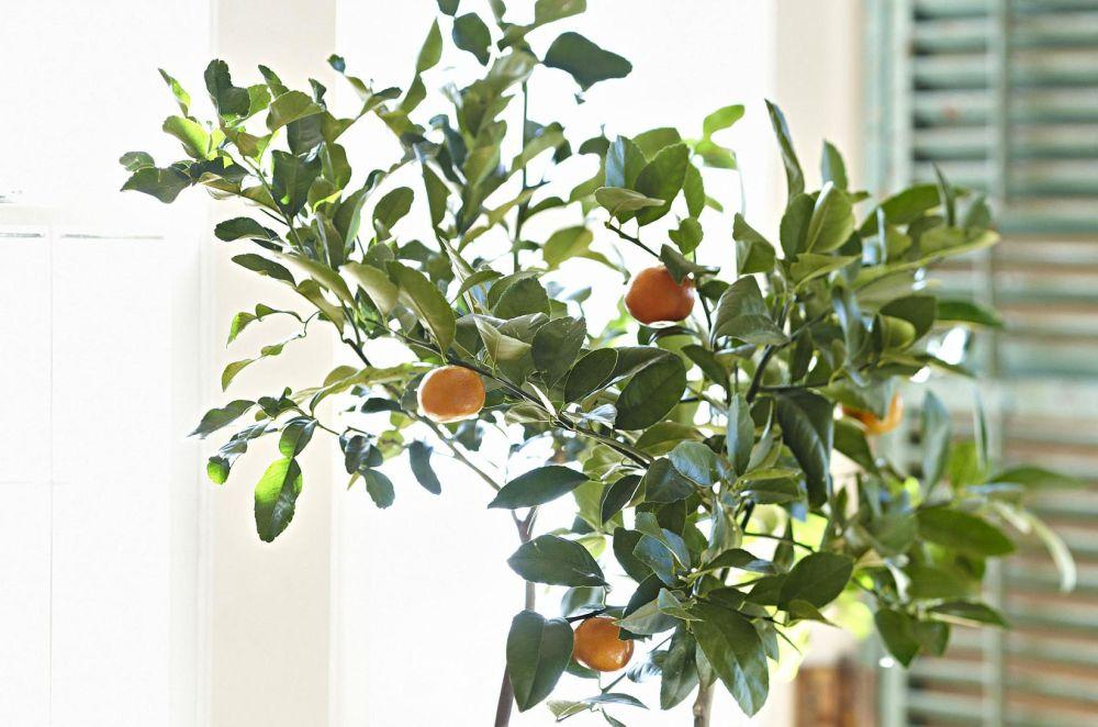 lumina portocal