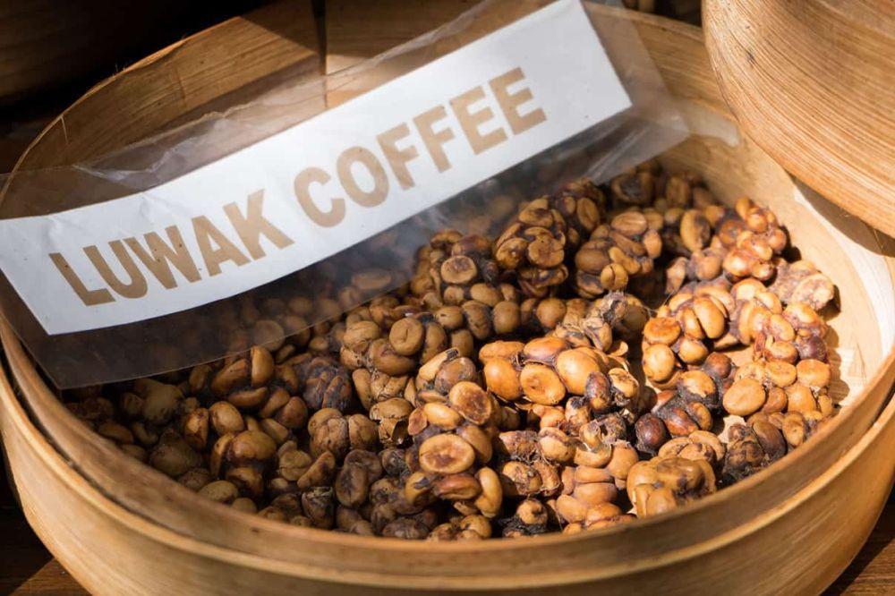 Kopi Luwak cafea