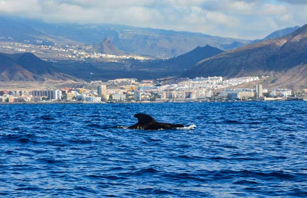 balene tenerife